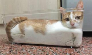 Divertidas Fotos De Gatos En Locas Posturas