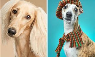 16 Retratos De Perros Divertidos y Conmoverdores