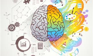¿Qué Parte De Tu Cerebro Es Más Dominante?