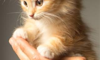 Una Compilación De Gatos Muy Lindos