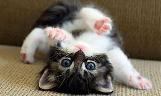 20 Tiernos Gatitos Que Endulzarán Tu Día...