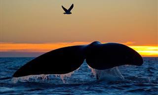 20 Majustuosas Fotos De Hermosas Ballenas