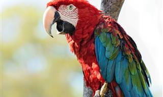 Los 14 Pájaros Más Coloridos Del Mundo