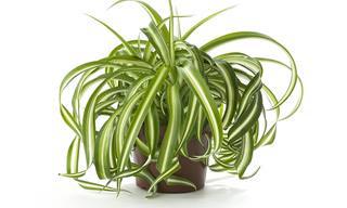 10 Plantas Que Pueden Sobrevivir Sin Luz