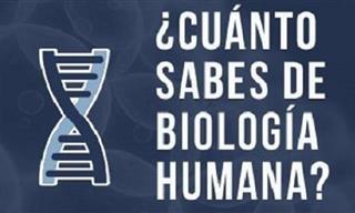 Test De Ciencias: ¿Cuánto Sabes Sobre El Cuerpo Humano?