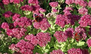 10 Hermosas Plantas De Hoja Perenne Para Cubrir Tu Jardín