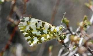 23 Sorprendentes Especies De Mariposas