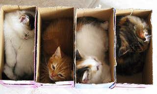 Los Gatos y Los Lugares Pequeños…