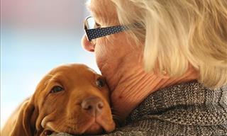 ¿Por Qué Los Animales Son Tan Buenos Para Tu Salud Física y Mental?