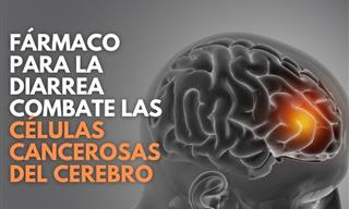 Medicamento Contra La Diarrea Combate Las Células Cancerosas Del Cerebro