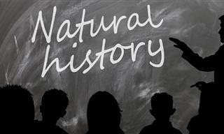 Chiste Del Día: Respuesta Incorrecta