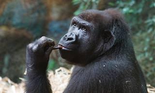 Chiste: Un mono En Un Bar