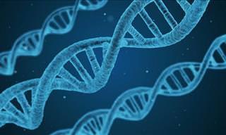 Aprobado Tratamiento Para Leucemia Con La Ingeniería Genética
