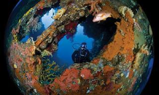 Las 15 Fotos Más Bellas Captadas Bajo El Agua