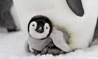 ¡Los Adorables Pingüinos De La Antártida!