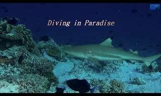 Disfruta De La Increíble Fauna Marítima De Las Maldivas