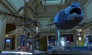 Un Paseo Por El Museo De Historia Natural