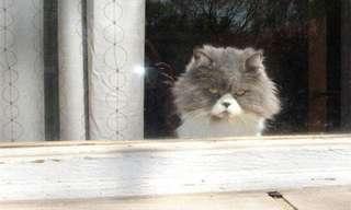 Las Caras De Estos Gatitos Esconden Algo Maléfico