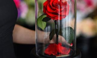 ¿Quieres Una Rosa Que Dure Para Siempre?