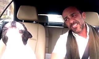 Tan Adorable: Bulldog Francés Canta a Dúo Con Su Dueño