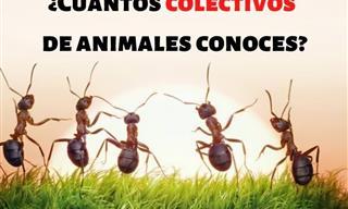 ¿Cuántos Colectivos De Animales Conoces?