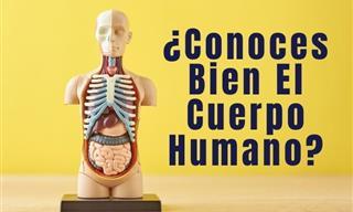 ¿Cuánto Sabes Del Cuerpo Humano?