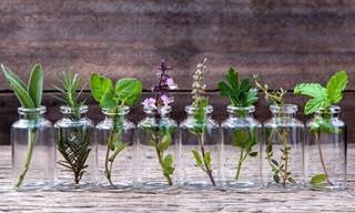 Guía Para Hacer Crecer Tus Especias En Agua