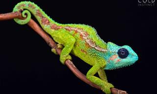 Preciosas Fotos De Reptiles Coloridos