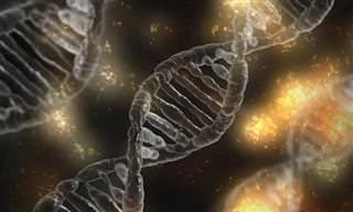 Telomerasa: La Enzima Antienvejecimiento