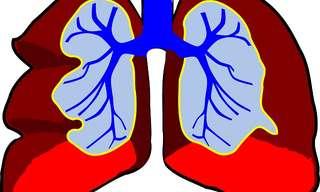 Los Mejores y Peores Alimentos Para Los Pulmones