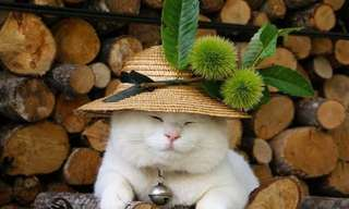 El Gato Más Perezoso De Japón