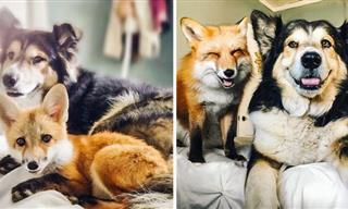 13 Hermosas Mascotas Que Crecieron Junto a Otras Mascotas o Dueños