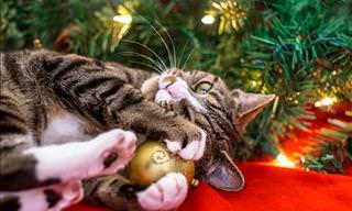 Estos Gatos Están Preparados Para La Navidad ¿Y Tú?