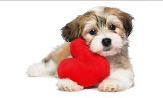 "14 Perros Cariñosos Dicen ""Te Amo"" ( I Love You)"