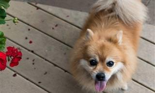 20 Razas De Perro Que Son Mascotas Ideales Para Mayores