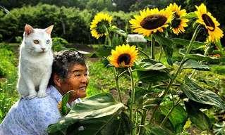La Amistad Entre Misao y Su Gato
