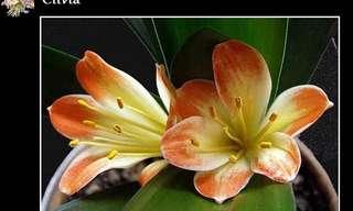 ¡El Maravilloso Reino De Las Flores!