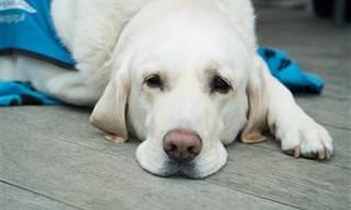 8 Signos De Alerta Para Llevar a Tu Mascota Al Veterinario
