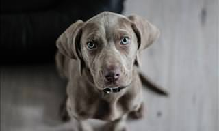 Remedios Caseros Para Desparasitar a Tu Perro