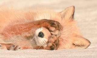 Adorables Animales de una Isla en Japón