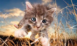 Estos Dulces Gatitos Creen Que Son Tigres Salvajes