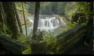 La Belleza De Los Bosques de EUA