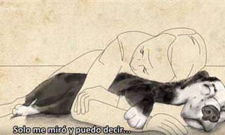 Emotiva Historia De Mutuo Salvamento Entre Perro y Dueño