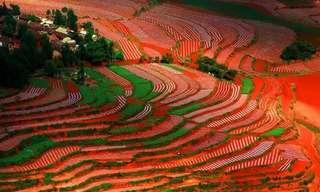 Los Coloridos y Deslumbrantes Campos De China