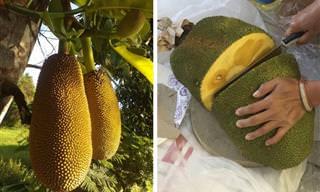 14 Frutas Exóticas Llenas De Nutrientes y Beneficios Para La Salud