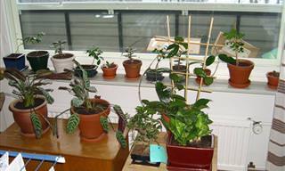 11 Pasos Para Lograr Unas Plantas Fabulosas En Las Macetas De Tu Hogar