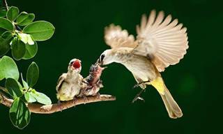 Madre Sólo Hay Una, y Estos Pajaritos Lo Saben Muy Bien
