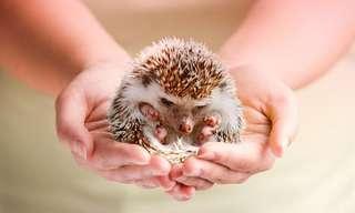 Bellos Animales Bebés Que Caben En Una Mano
