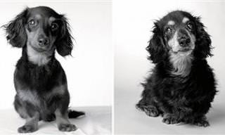 Fotos De Mascotas: Antes y Después