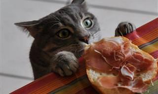 Cuando Un Gato Tiene Hambre Es Un Ladrón Muy Sigiloso...